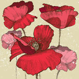 Poppy flowers. In vintage style Royalty Free Stock Photos