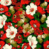 Poppy flowers. Seamless pattern composed of poppy flowers Stock Photos