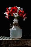 Poppy Flowers Fotos de Stock