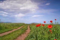 Poppy flowers against blue sky Stock Image