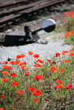 Poppy flowers along railway tracks Stock Image