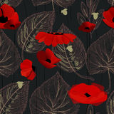 Poppy flowers background Royalty Free Stock Photography