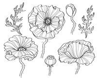 Poppy flowers. Black and white illustration. line art Stock Image