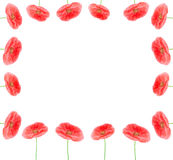 Poppy flowers border frame Royalty Free Stock Image