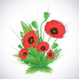 Poppy flowers bouquet. Royalty Free Stock Photo