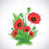 Poppy flowers bouquet. Royalty Free Stock Photo