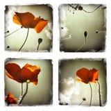 Poppy flowers collage Stock Photos
