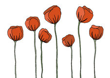 Poppy. Flowers for composition, frame and other stock illustration