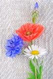 Poppy flowers  and cornflower Royalty Free Stock Photo