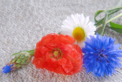Poppy flowers  and cornflower Stock Photos