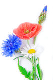 Poppy flowers  and cornflower Royalty Free Stock Photography
