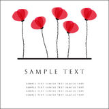Poppy flowers. Design for greeting card Royalty Free Stock Photos