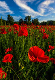 Poppy flowers field in mountains. Beautiful summer landscape at sunset Stock Image