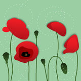 vector poppy flowers Royalty Free Stock Photo