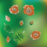 Poppy flowers. The flowers of the field. Vector illustration. Red poppies on a green background. Design for banner, poster, greeting, invitation cards Stock Image