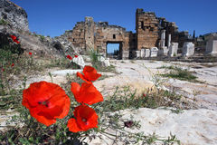 Poppy flowers grow through the cracks in the marble roadway along Frontinus Street in the ancient city of Hierapolis in Turkey. Stock Photography