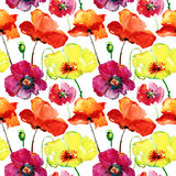 Poppy flowers illustration, seamless pattern Stock Photography