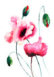 Poppy flowers illustration Royalty Free Stock Images