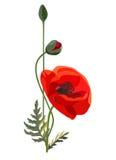 Poppy Flowers Isolated på vit bakgrund vektor Stock Illustrationer