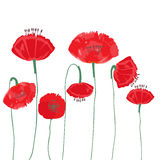 Poppy flowers isolated on white background. Stock Images