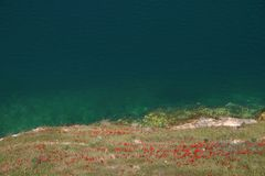 Poppy Flowers at Lake Assad - Syria Stock Photo