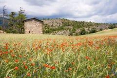 Poppy flowers landscape Royalty Free Stock Photo