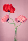 Poppy flowers on a pink background Stock Photo
