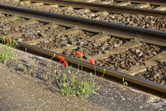 Poppy flowers and railway Stock Image