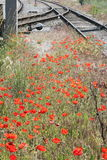 Poppy flowers and railway tracks Stock Photos
