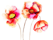 Poppy flowers Royalty Free Stock Photography