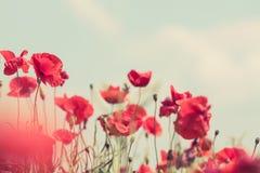 Poppy flowers retro peaceful summer background Royalty Free Stock Photos
