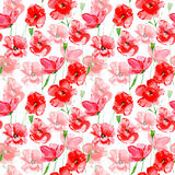 Poppy flowers seamless pattern. Poppy flowers.Floral seamless pattern.Watercolor hand drawn illustration.White background Stock Image