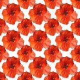 Poppy flowers seamless pattern on white background.handmade oil painting on canvas stock illustration