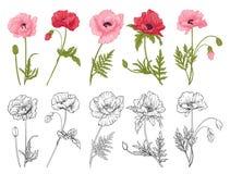Poppy flowers set Stock Images