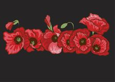 Poppy flowers set. Vector isolated blooming red poppies on black. Floral botanical illustration for design decor or holiday greeti. Ngs template royalty free illustration