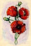 Poppy Flowers Sketch Royalty Free Stock Photo