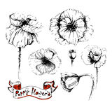 Poppy flowers sketches in different positions Royalty Free Stock Photos