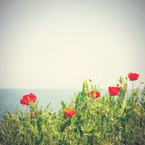 Poppy flowers in the sky Stock Image