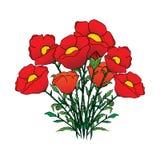 Poppy flowers vector royalty free illustration
