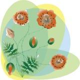 Poppy Flowers Vettore illustrazione di stock