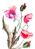 Poppy flowers, watercolor illustration Stock Images