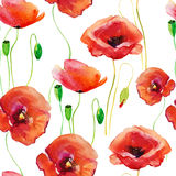 Poppy flowers, watercolor illustration Royalty Free Stock Images