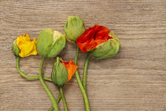 Poppy flowers on wooden background Stock Photography