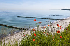 Poppy in front of the sea Royalty Free Stock Photo