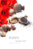 Poppy grain and flowers Royalty Free Stock Photo