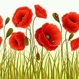 Poppy grass seamless wallpaper Royalty Free Stock Photos