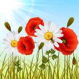 Poppy grass seamless wallpaper Royalty Free Stock Image