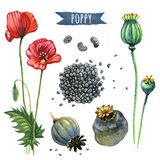 Poppy, hand-painted watercolor set Royalty Free Stock Photos