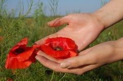 Poppy on hands. Poppy flower on women hands Royalty Free Stock Image