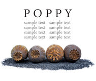 Poppy heads and seeds Royalty Free Stock Images